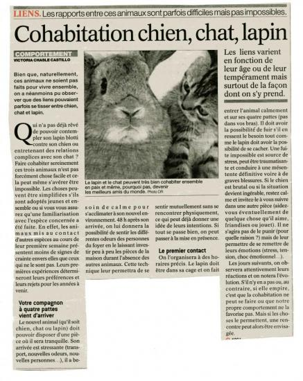 chien,chat,lapin